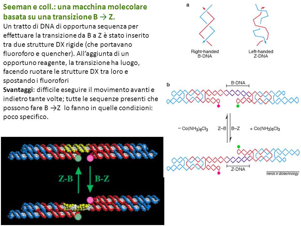 Seeman e coll.: una macchina molecolare basata su una transizione B Z.