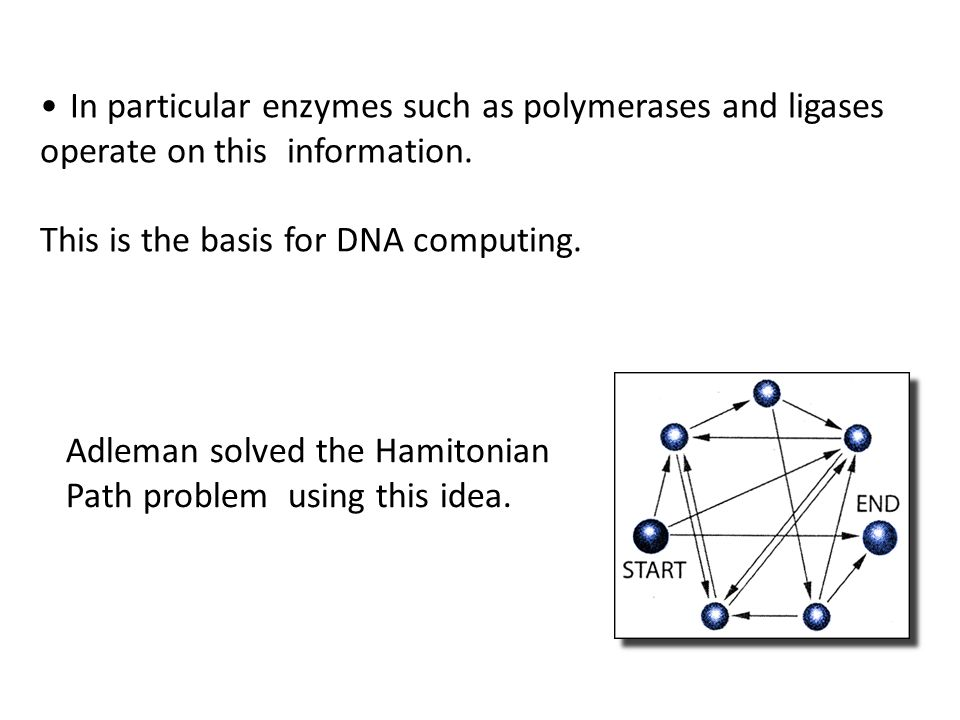 In particular enzymes such as polymerases and ligases operate on this information. This is the basis for DNA computing. Adleman solved the Hamitonian