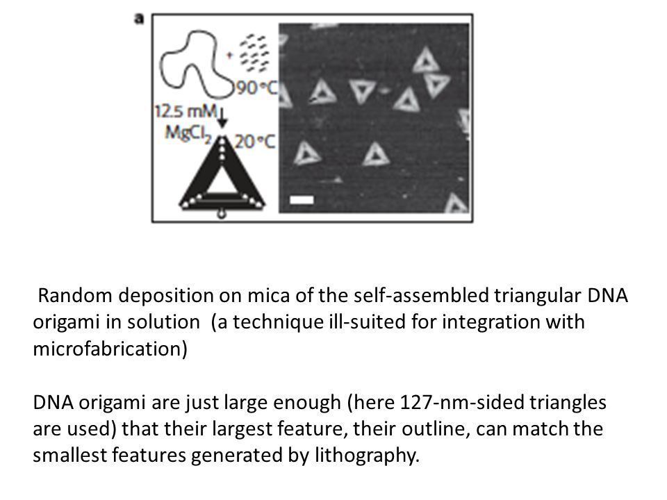 Random deposition on mica of the self-assembled triangular DNA origami in solution (a technique ill-suited for integration with microfabrication) DNA origami are just large enough (here 127-nm-sided triangles are used) that their largest feature, their outline, can match the smallest features generated by lithography.