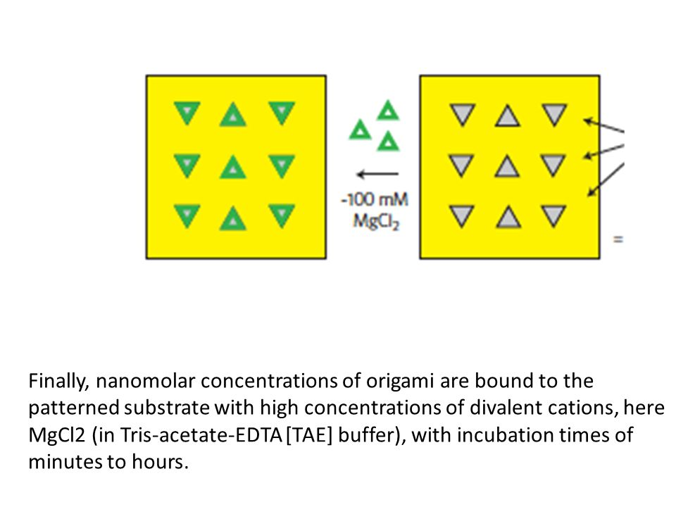 Finally, nanomolar concentrations of origami are bound to the patterned substrate with high concentrations of divalent cations, here MgCl2 (in Tris-acetate-EDTA [TAE] buffer), with incubation times of minutes to hours.