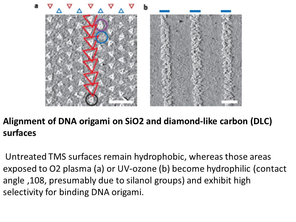 Alignment of DNA origami on SiO2 and diamond-like carbon (DLC) surfaces Untreated TMS surfaces remain hydrophobic, whereas those areas exposed to O2 p