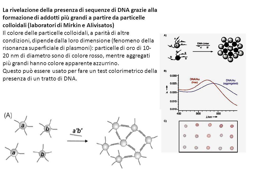 La rivelazione della presenza di sequenze di DNA grazie alla formazione di addotti più grandi a partire da particelle colloidali (laboratori di Mirkin e Alivisatos) Il colore delle particelle colloidali, a parità di altre condizioni, dipende dalla loro dimensione (fenomeno della risonanza superficiale di plasmoni): particelle di oro di 10- 20 nm di diametro sono di colore rosso, mentre aggregati più grandi hanno colore apparente azzurrino.