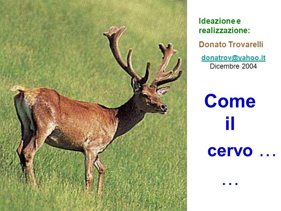cervo Come il Ideazione e realizzazione: Donato Trovarelli donatrov@yahoo.it donatrov@yahoo.it Dicembre 2004 … …