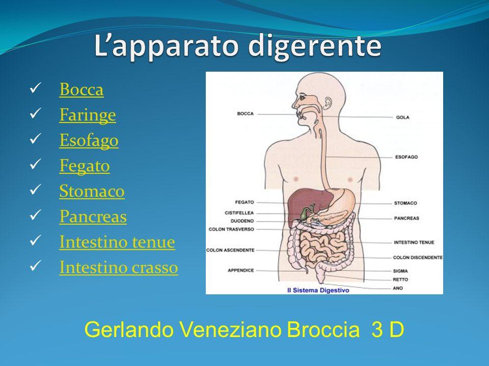 Bocca Faringe Esofago Fegato Stomaco Pancreas Intestino tenue Intestino crasso Gerlando Veneziano Broccia 3 D