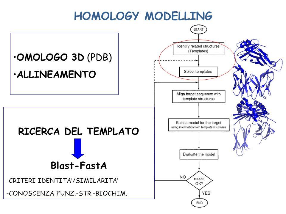 HOMOLOGY MODELLING OMOLOGO 3D (PDB) ALLINEAMENTO RICERCA DEL TEMPLATO Blast-FastA -CRITERI IDENTITA/SIMILARITA -CONOSCENZA FUNZ.-STR.-BIOCHIM.