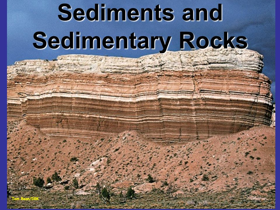 From sediment to sedimentary rock (lithification) Compaction: reduces pore space Clays and muds are up to 60% water; 10% water after compaction.