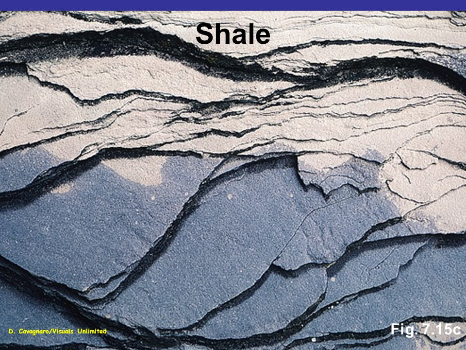 Fig. 7.15c Shale D. Cavagnaro/Visuals Unlimited