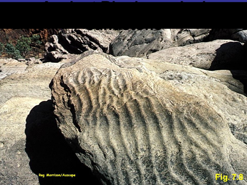 Reg Morrison/Auscape Fig. 7.8 Ancient Ripple-marked Sandstone