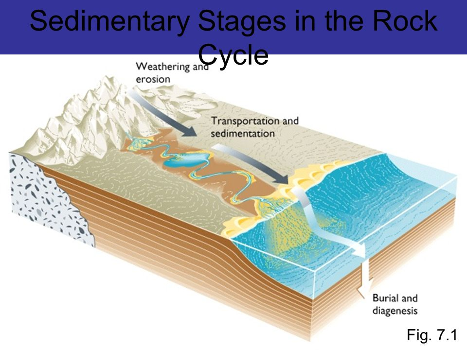 Sedimentary Stages in the Rock Cycle Fig. 7.1