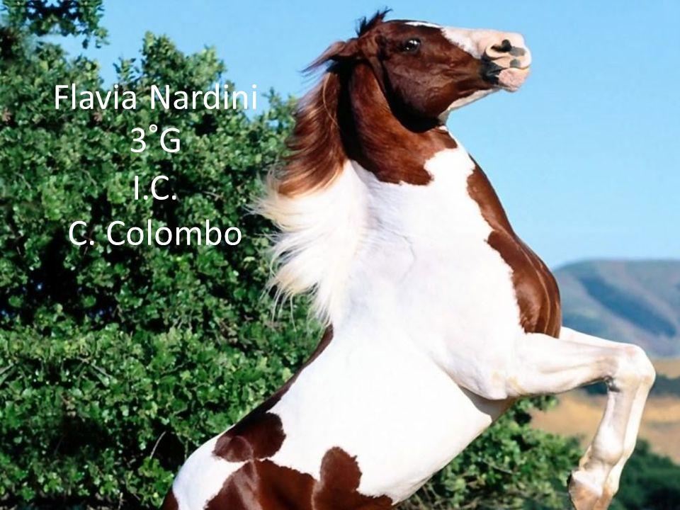 Flavia Nardini 3°G I.C. C. Colombo