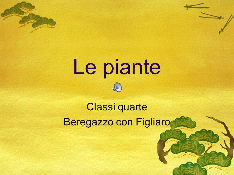 Le piante Classi quarte Beregazzo con Figliaro