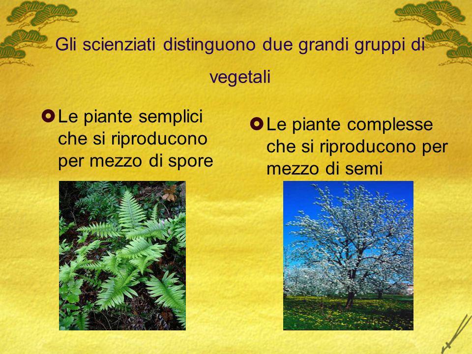 Gli scienziati distinguono due grandi gruppi di vegetali Le piante semplici che si riproducono per mezzo di spore Le piante complesse che si riproduco