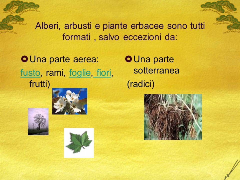 Alberi, arbusti e piante erbacee sono tutti formati, salvo eccezioni da: Una parte aerea: fusto, rami, foglie, fiori, frutti) Una parte sotterranea (r