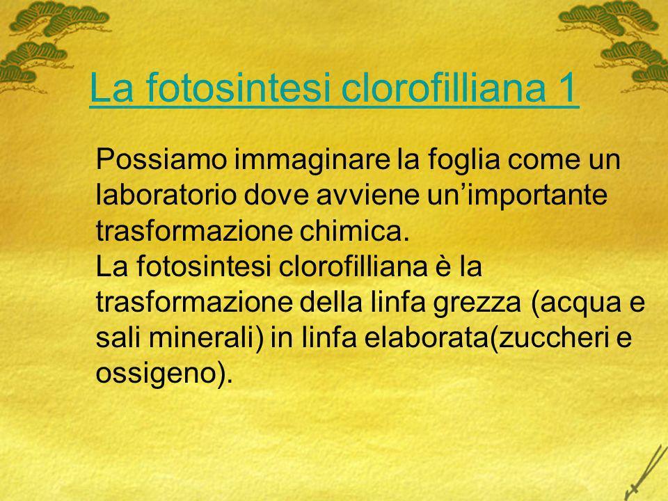 La fotosintesi clorofilliana 1 Possiamo immaginare la foglia come un laboratorio dove avviene unimportante trasformazione chimica. La fotosintesi clor