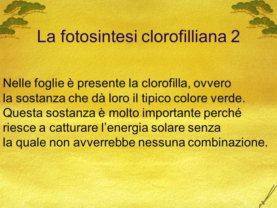 La fotosintesi clorofilliana 2 Nelle foglie è presente la clorofilla, ovvero la sostanza che dà loro il tipico colore verde. Questa sostanza è molto i