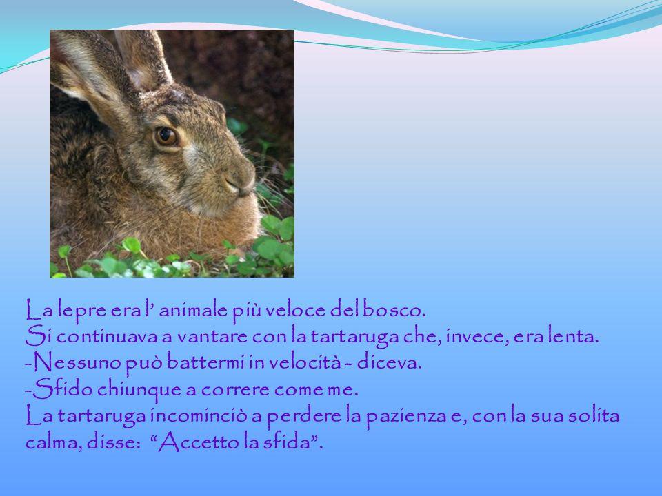 La lepre era l animale più veloce del bosco.