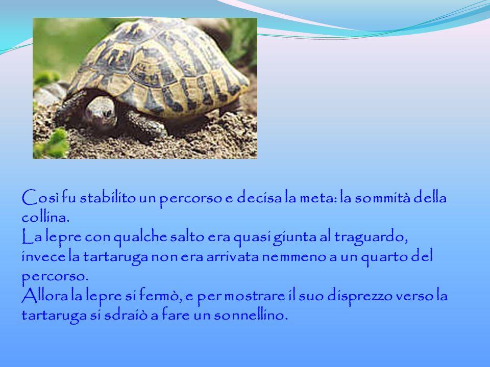 La tartaruga intanto camminava con fatica, un passo dopo l altro, e quando la lepre si svegliò, la tartaruga era quasi arrivata al traguardo.