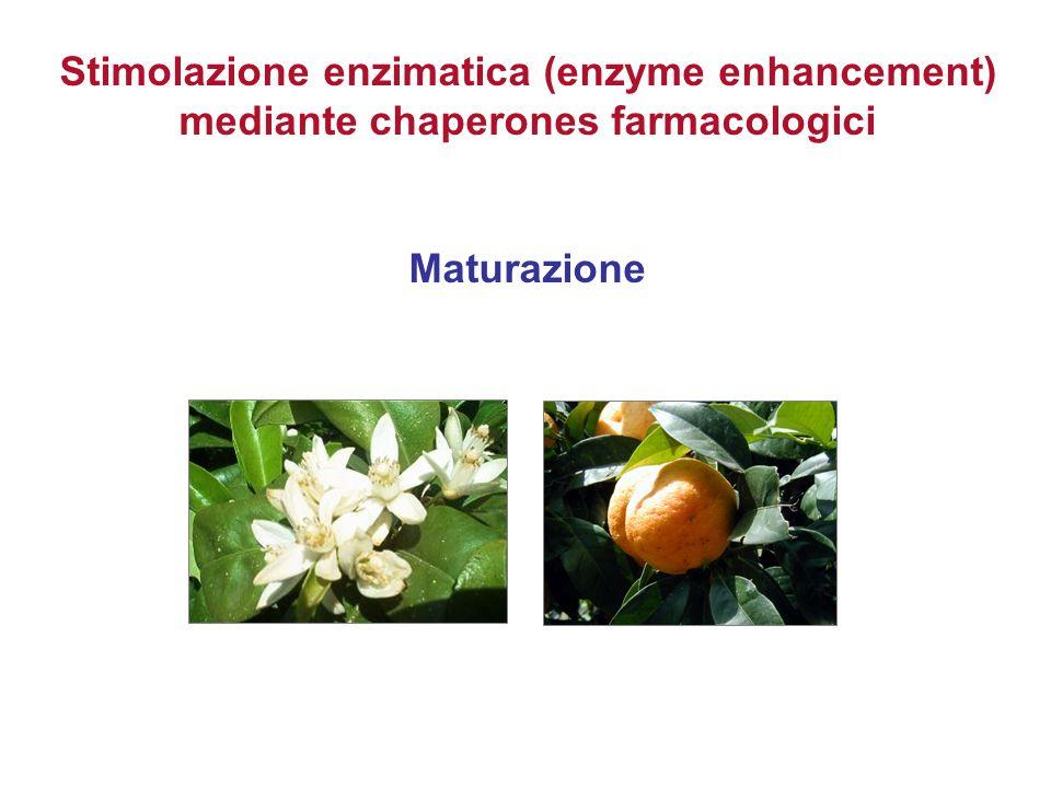 Stimolazione enzimatica (enzyme enhancement) mediante chaperones farmacologici Maturazione