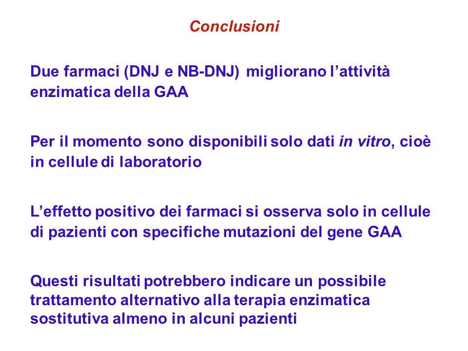 Conclusioni Due farmaci (DNJ e NB-DNJ) migliorano lattività enzimatica della GAA Per il momento sono disponibili solo dati in vitro, cioè in cellule d