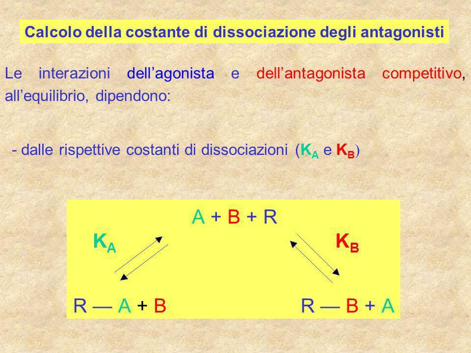 Calcolo della costante di dissociazione degli antagonisti Le interazioni dellagonista e dellantagonista competitivo, allequilibrio, dipendono: - dalle