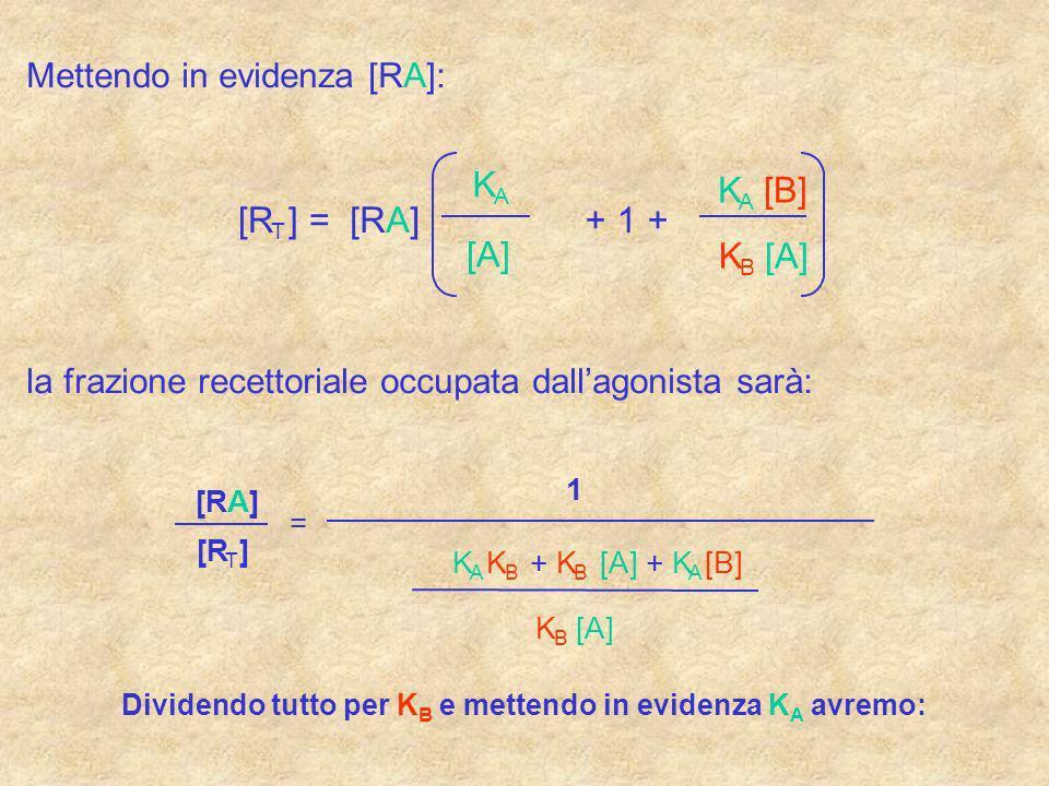 Mettendo in evidenza [RA]: [R T ] =[RA] K B [A] K A + 1 + K A [B] la frazione recettoriale occupata dallagonista sarà: [R T ] [RA] = 1 K B [A] K A K B