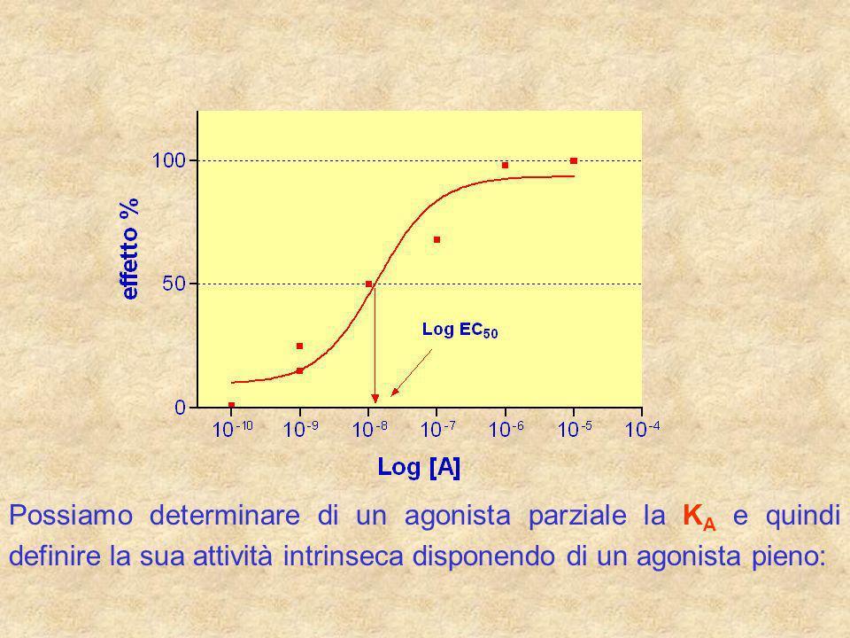 Calcolo della costante di dissociazione degli antagonisti Le interazioni dellagonista e dellantagonista competitivo, allequilibrio, dipendono: - dalle rispettive costanti di dissociazioni (K A e K B ) A +B + R R A +BR B +A K A K B