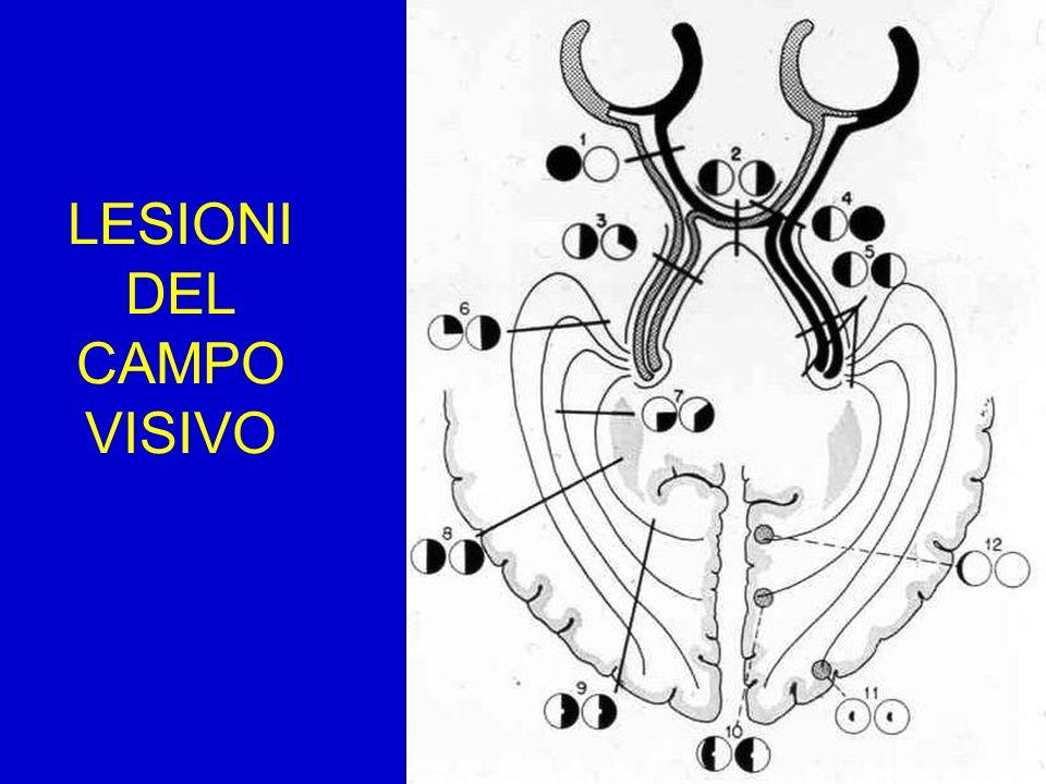BIANCO FOTOPICO BLU SCOTOPICO BIANCO SCOTOPICO ROSSO SCOTOPICO MODIFICAZIONI DEL SEGNALE ERG IN FUNZIONE DELLE CARATTERISTICHE DI STIMOLAZIONE