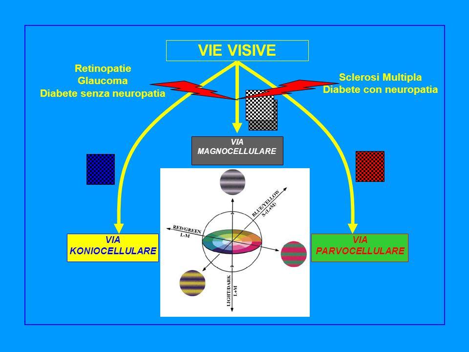 VIE VISIVE VIA MAGNOCELLULARE VIA KONIOCELLULARE VIA PARVOCELLULARE Sclerosi Multipla Diabete con neuropatia Retinopatie Glaucoma Diabete senza neurop