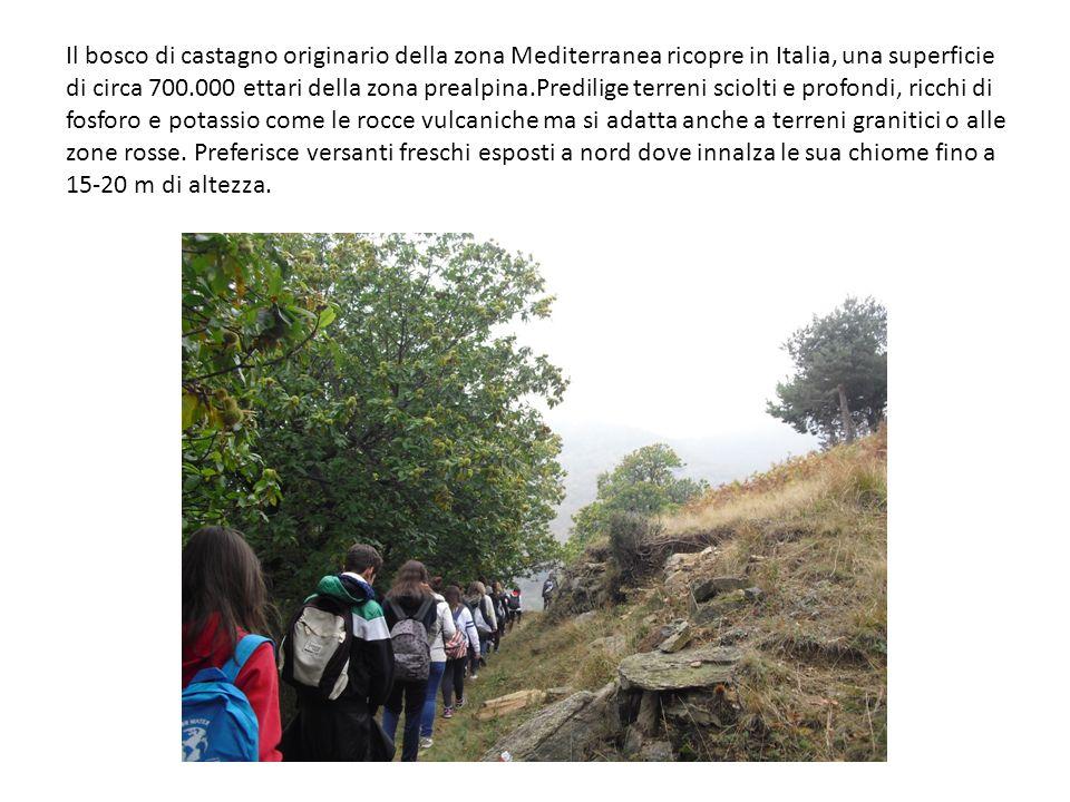 Il bosco di castagno originario della zona Mediterranea ricopre in Italia, una superficie di circa 700.000 ettari della zona prealpina.Predilige terre