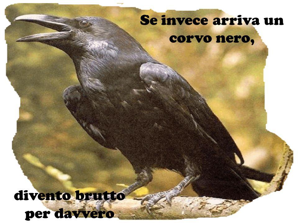 Se invece arriva un corvo nero, divento brutto per davvero