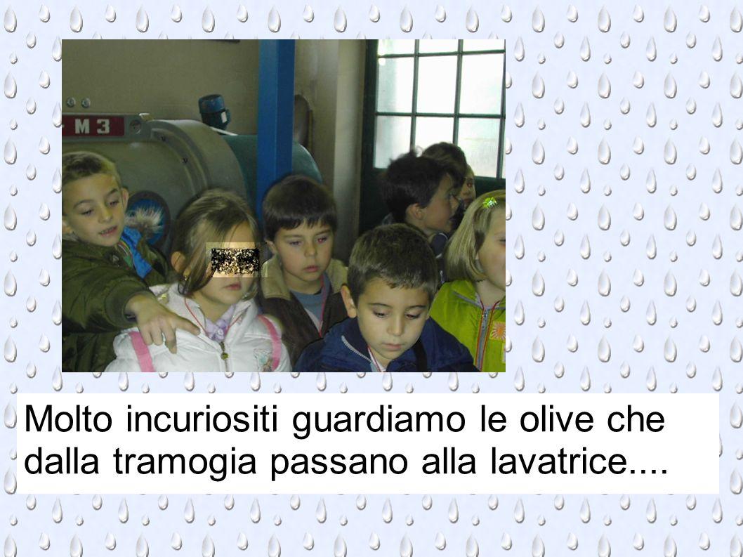 Molto incuriositi guardiamo le olive che dalla tramogia passano alla lavatrice....