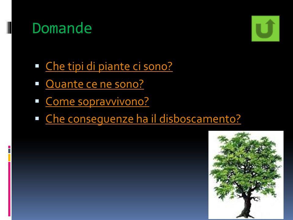 Domande Che tipi di piante ci sono? Quante ce ne sono? Come sopravvivono? Che conseguenze ha il disboscamento?