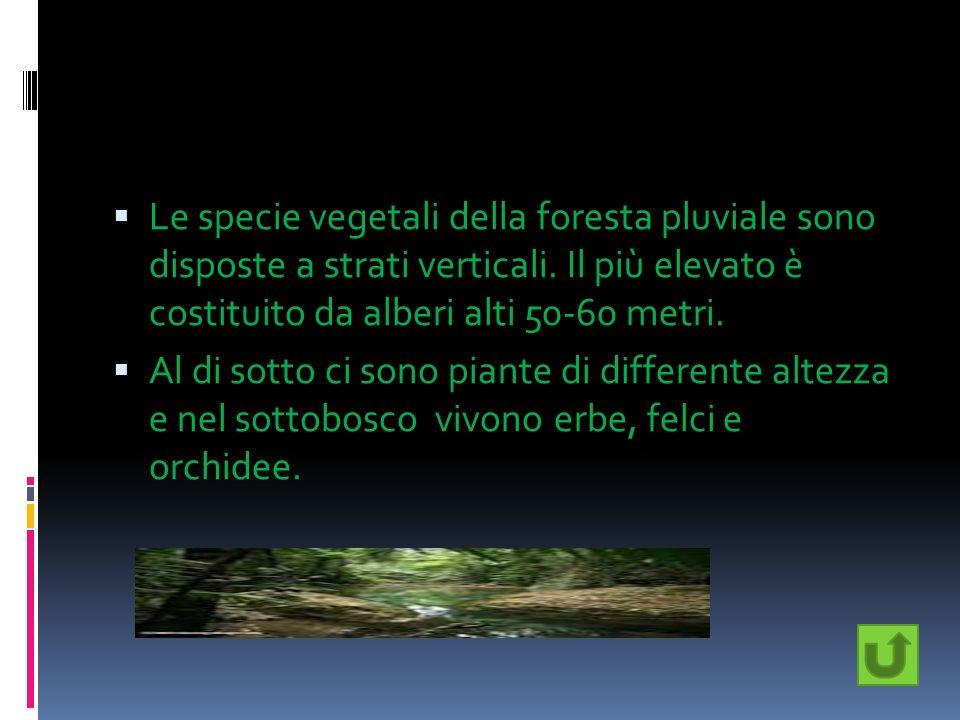 Le specie vegetali della foresta pluviale sono disposte a strati verticali. Il più elevato è costituito da alberi alti 50-60 metri. Al di sotto ci son