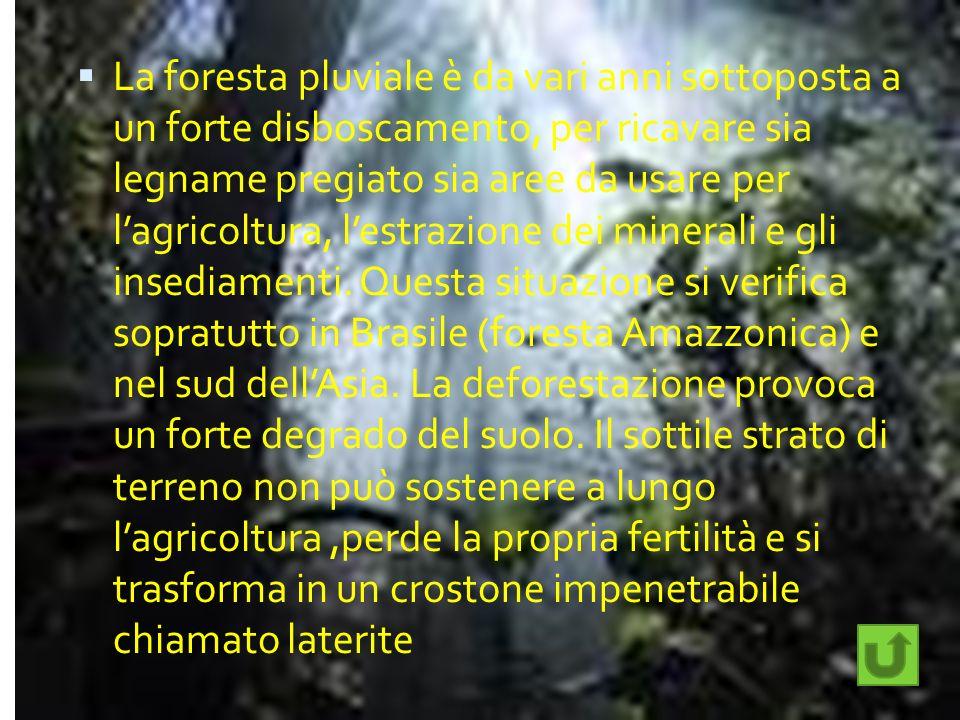 La foresta pluviale è da vari anni sottoposta a un forte disboscamento, per ricavare sia legname pregiato sia aree da usare per lagricoltura, lestrazi