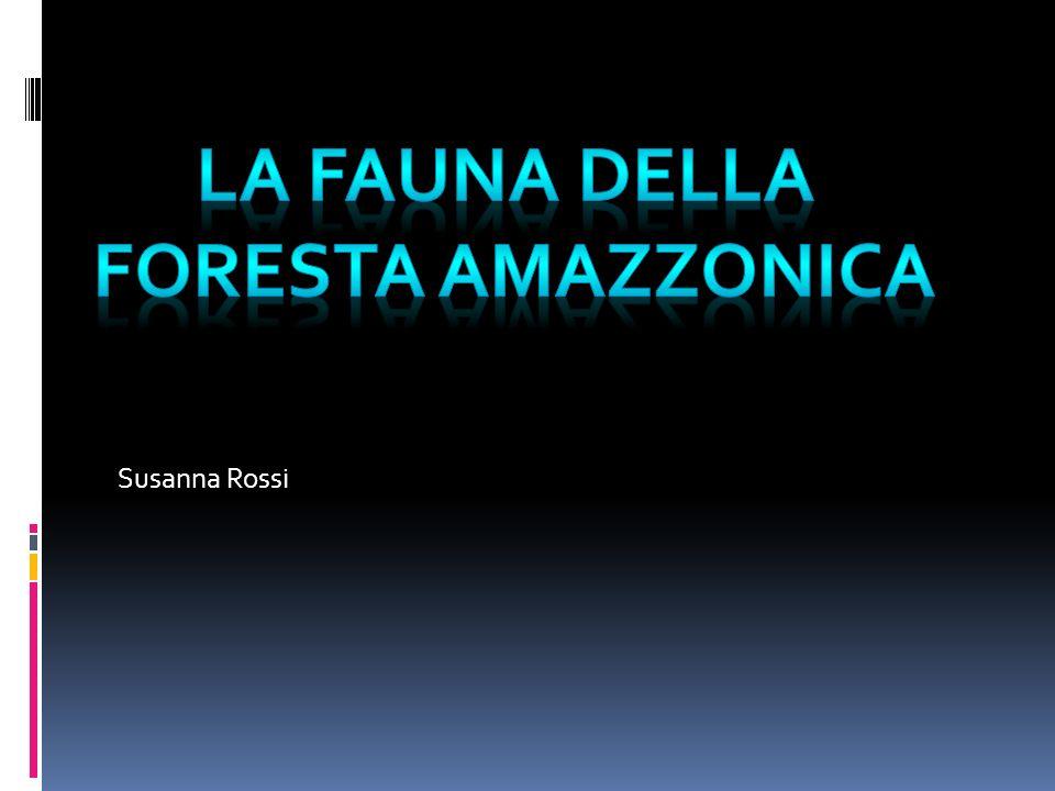 Susanna Rossi