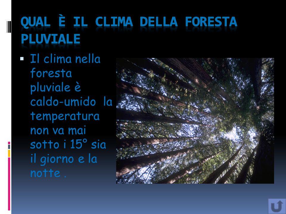 Il clima nella foresta pluviale è caldo-umido la temperatura non va mai sotto i 15° sia il giorno e la notte.