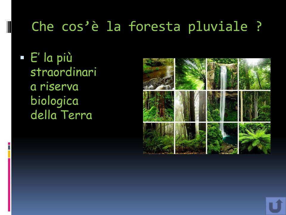 Bibliografia: Libro TERRA 3 di Pietro Melani e Giulia Spriano Sitografia : http://it.wikipedia.org/wiki/Foresta_pluviale http://www.ics.premana.lc.it/ixtesti3B/Sito%20ambienti/foresta_ pluviale.htm