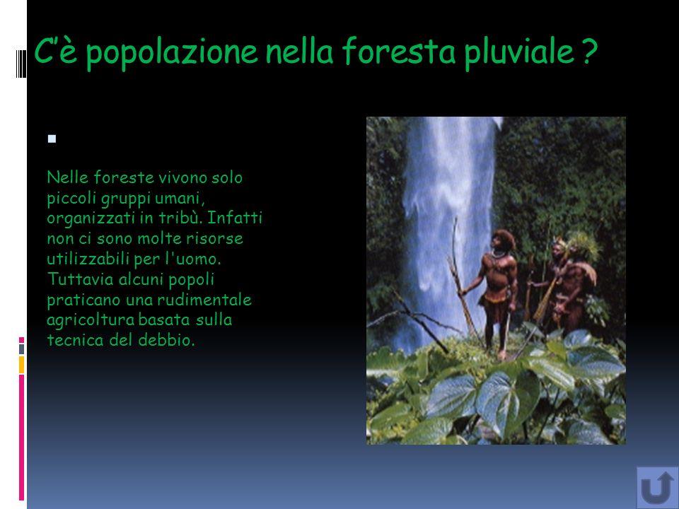Cè popolazione nella foresta pluviale ? Nelle foreste vivono solo piccoli gruppi umani, organizzati in tribù. Infatti non ci sono molte risorse utiliz