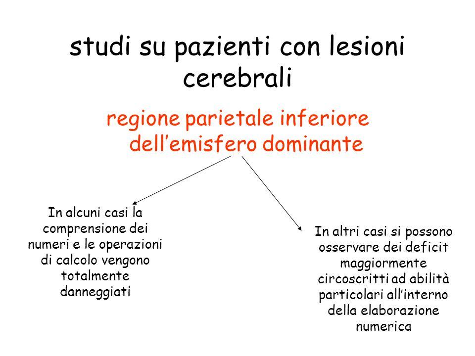 studi su pazienti con lesioni cerebrali regione parietale inferiore dellemisfero dominante In alcuni casi la comprensione dei numeri e le operazioni d