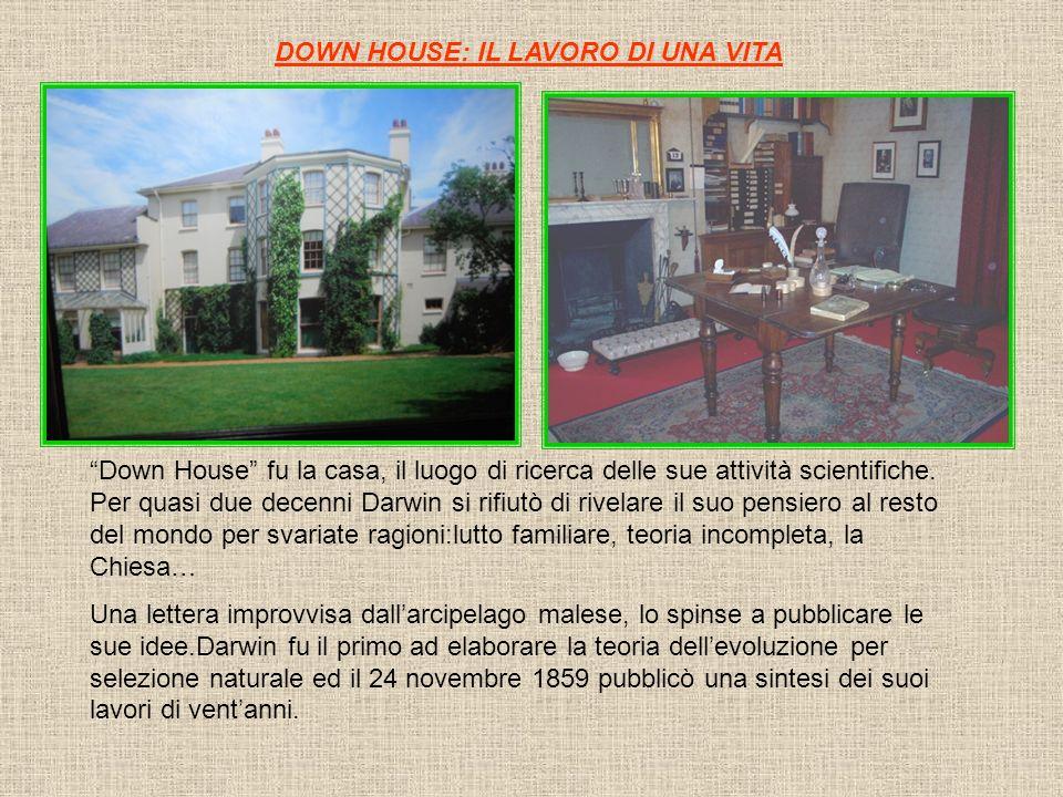 DOWN HOUSE: IL LAVORO DI UNA VITA Down House fu la casa, il luogo di ricerca delle sue attività scientifiche. Per quasi due decenni Darwin si rifiutò