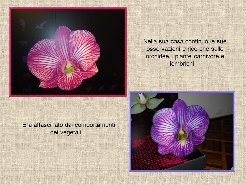 Nella sua casa continuò le sue osservazioni e ricerche sulle orchidee…piante carnivore e lombrichi… Era affascinato dai comportamenti dei vegetali…