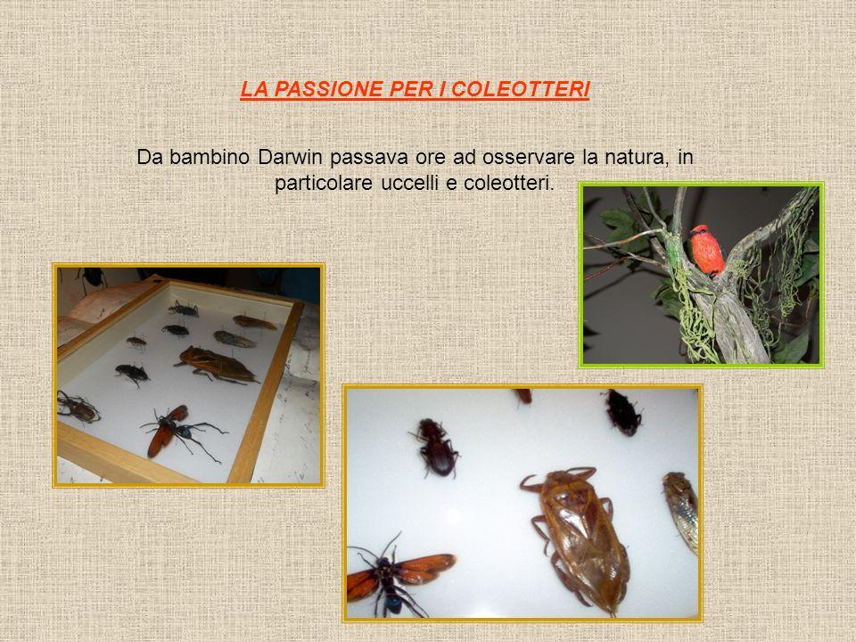 LA PASSIONE PER I COLEOTTERI Da bambino Darwin passava ore ad osservare la natura, in particolare uccelli e coleotteri.