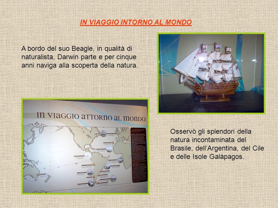 IN VIAGGIO INTORNO AL MONDO A bordo del suo Beagle, in qualità di naturalista, Darwin parte e per cinque anni naviga alla scoperta della natura.