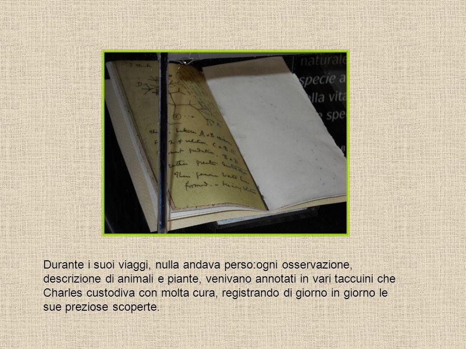 Durante i suoi viaggi, nulla andava perso:ogni osservazione, descrizione di animali e piante, venivano annotati in vari taccuini che Charles custodiva