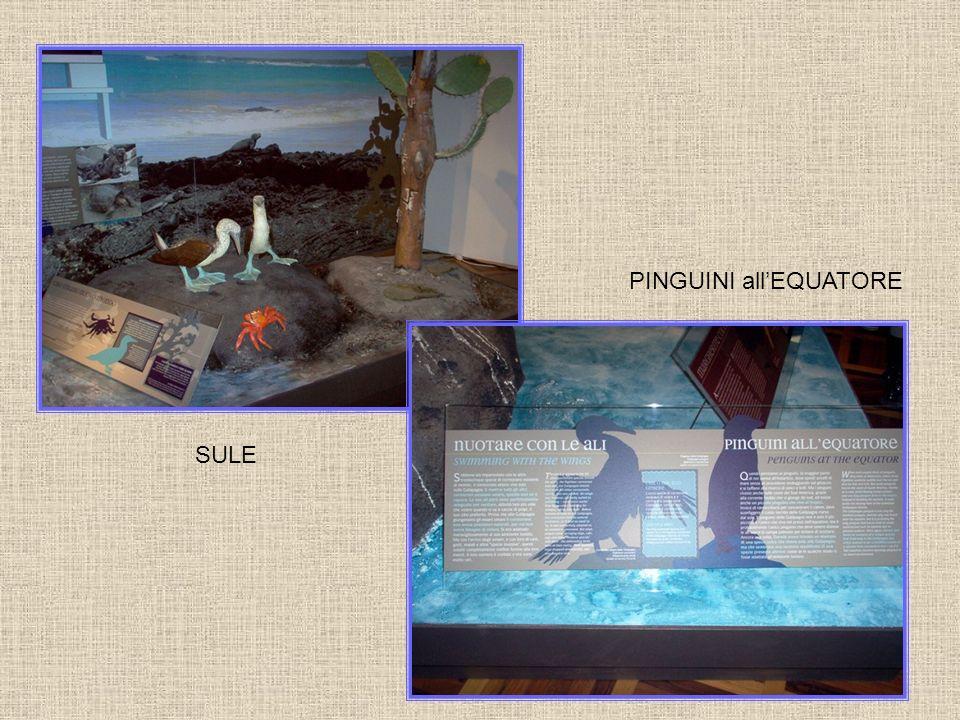 PINGUINI allEQUATORE SULE