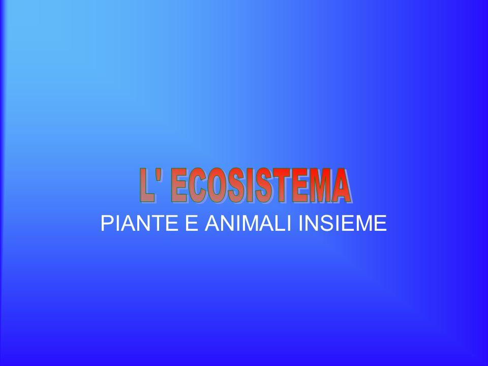 PIANTE E ANIMALI INSIEME