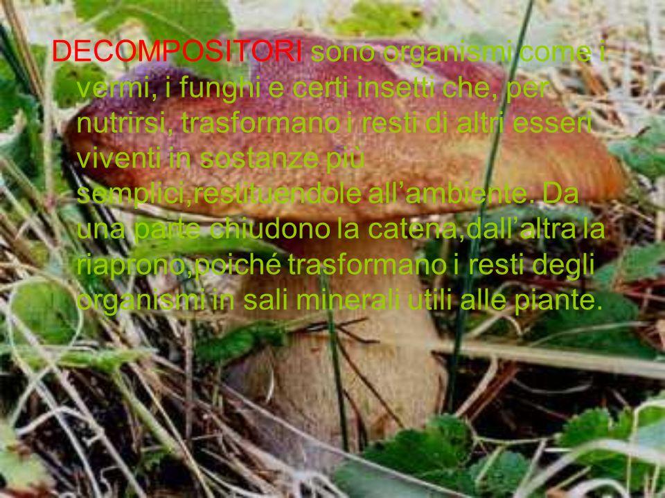 DECOMPOSITORI sono organismi come i vermi, i funghi e certi insetti che, per nutrirsi, trasformano i resti di altri esseri viventi in sostanze più sem