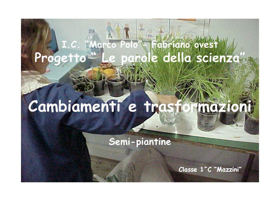 I.C. Marco Polo- Fabriano ovest Progetto Le parole della scienza Cambiamenti e trasformazioni Semi-piantine Classe 1^C Mazzini