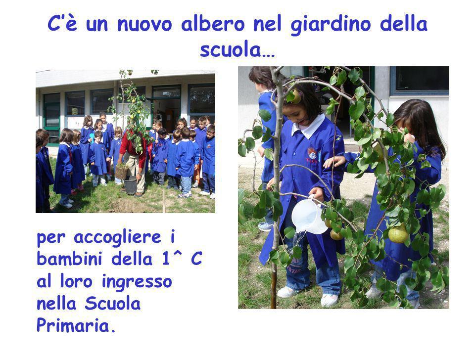 Cè un nuovo albero nel giardino della scuola… per accogliere i bambini della 1^ C al loro ingresso nella Scuola Primaria.