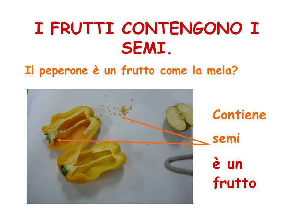I FRUTTI CONTENGONO I SEMI. Il peperone è un frutto come la mela? Contiene semi è un frutto